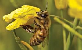 EU to vote on neonicotinoids ban on April 27