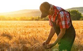 Kansas State University and Compass Minerals Plant Nutrition sign research agreement