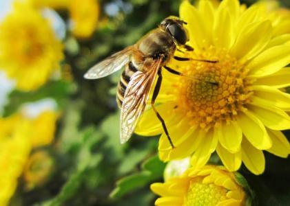欧盟将于年底前禁止户外施用三种新烟碱杀虫剂吡虫啉、噻虫胺、噻虫嗪