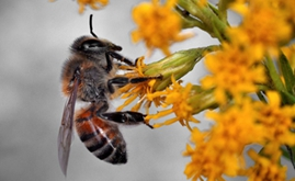 EU set to completely ban outdoor use of three neonic insecticides