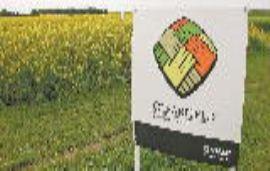 巴斯夫拟出售加拿大Clearfield油菜业务通过反垄断审查