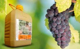 巴斯夫在西班牙推出唑嘧菌胺系列Enervin杀菌剂产品