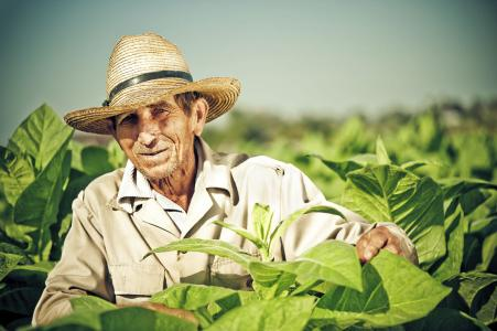 揭开加勒比及中美洲农业市场的神秘面纱:有机种植前景开阔 未来10-15年迎快速发展