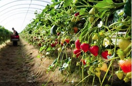 India Contract Farming: Strengthening farmers through innovating agriculture processes