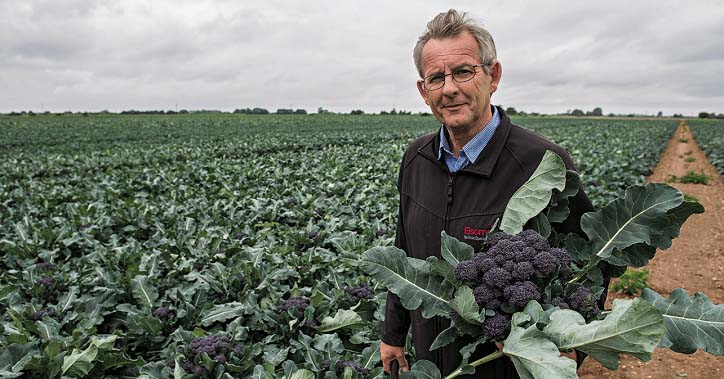 Burgundy; a revolutionary new purple sprouting broccoli from Elsoms Seeds