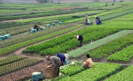 A Review of Vietnam's Recent Agricultural Policies