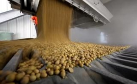 Brazil exported 57 times more soybeans to China than U.S. in Sept.