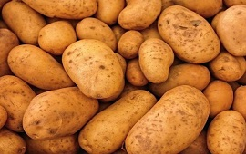 Indofil Potato protection campaign targets 3.6L ton yield in U'khand India