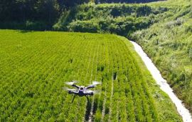 Japan seeks to harness drones for agriculture