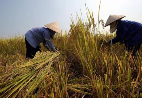 越南即日起禁止草甘膦进口 未来将彻底禁用草甘膦