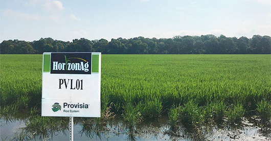 Horizon Ag varieties ranked high for quality by Nicaraguan rice purchasers