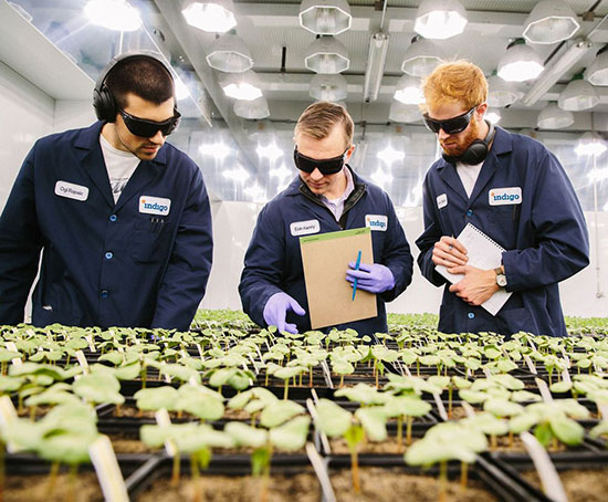 Indigo - most valuable agtech startup in the world begins operations in Brazil