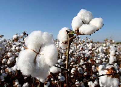 Adama's new cotton insecticide Comissario approved in Brazil