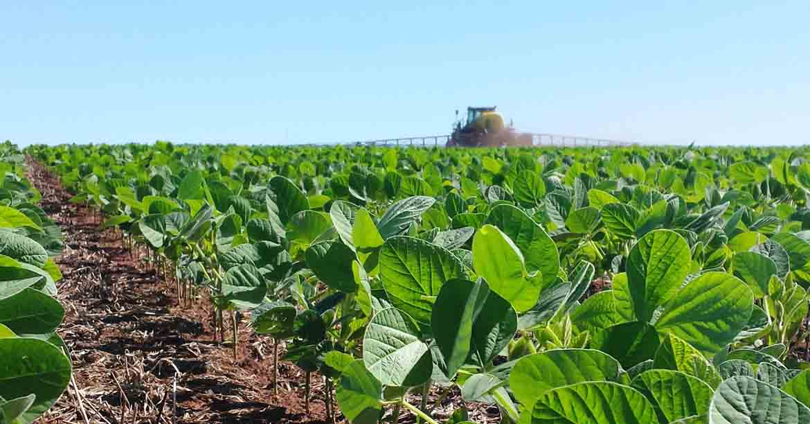 BASF launches soybean varieties in Brazil and reinforces commitment to efficient crop management