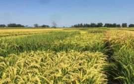 Italy granted emergency use approval for Corteva's Loyant herbicide