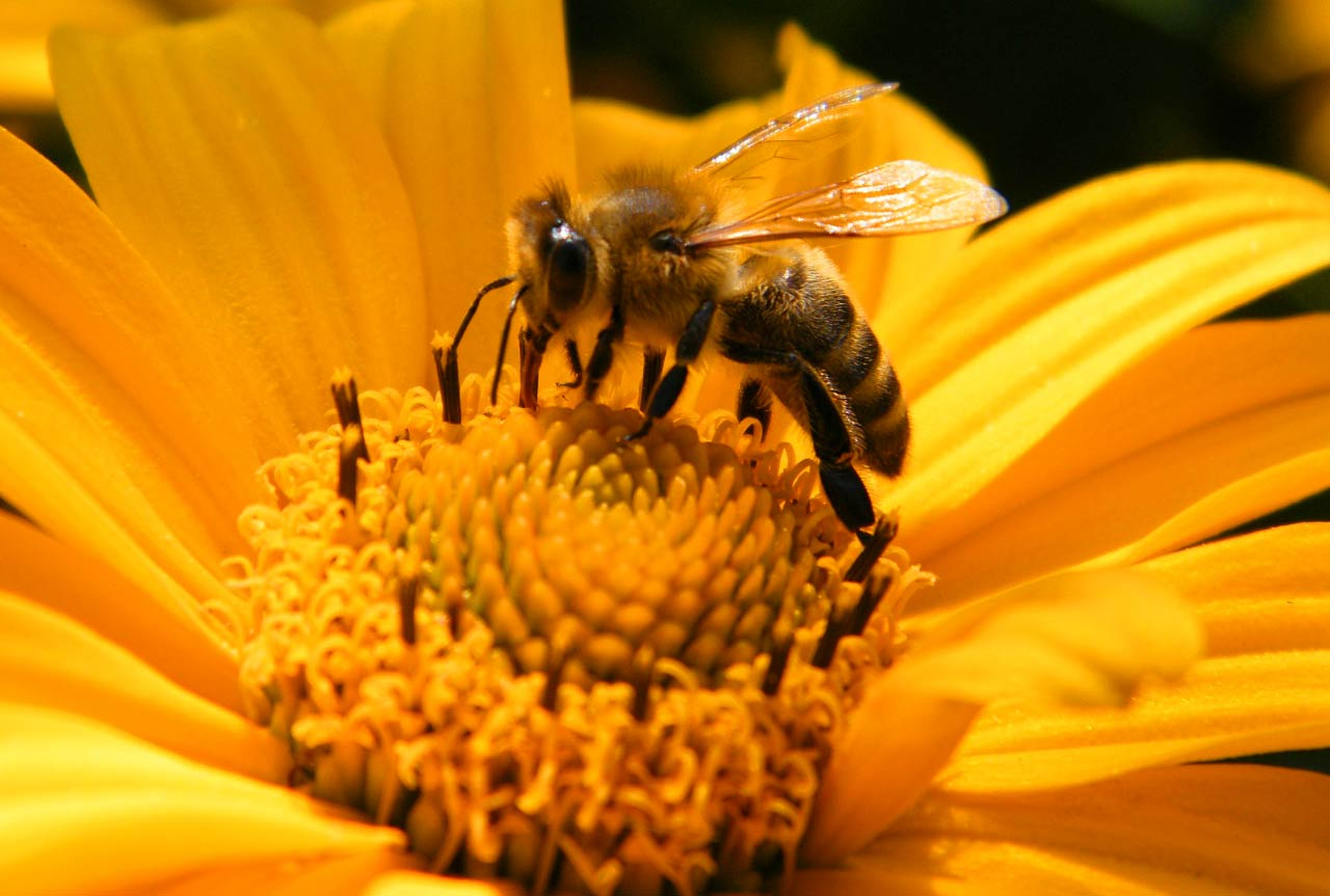 Pesticides deliver a one-two punch to honey bees - Adjuvants not as benign as previously thought