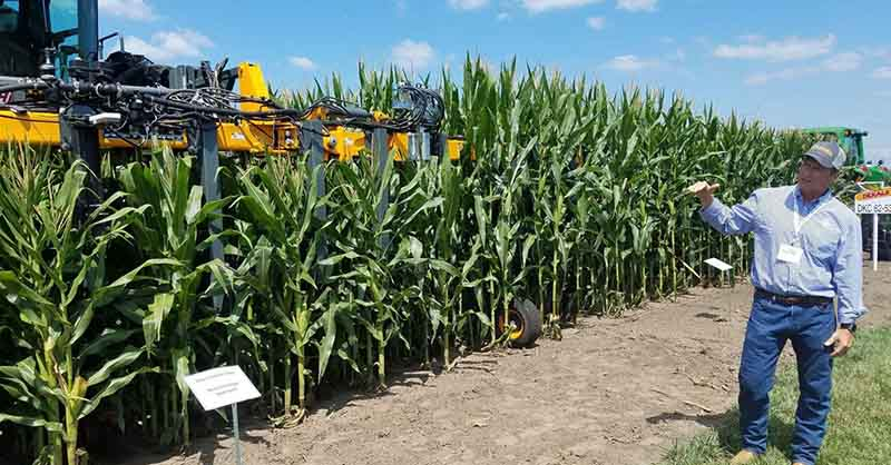 Bayer sees a big future for short corn varieties