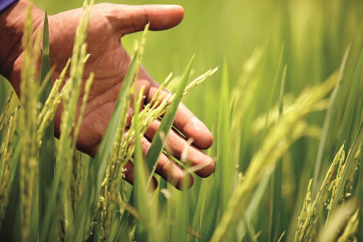 BASF's new fungicide Belanty launched in Colombia