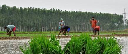 'Agri sector to drive social, economic transformation in India'