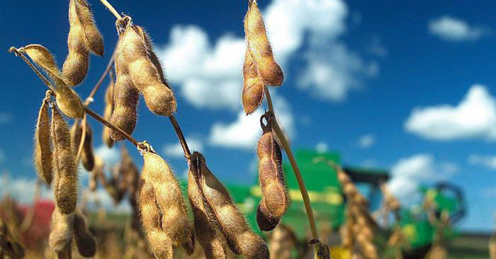 German groups lose GMO soybean battle to Monsanto at top European court