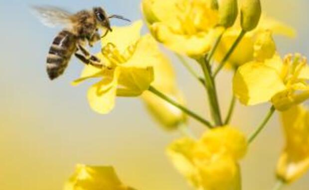 EFSA consults on review of guidance on pesticides and beesv