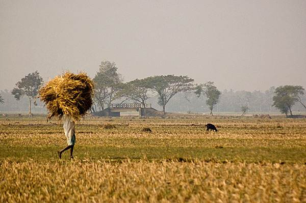 Pilarquim working with NAAFCO to offer leading products, services to Bangladeshi farmers