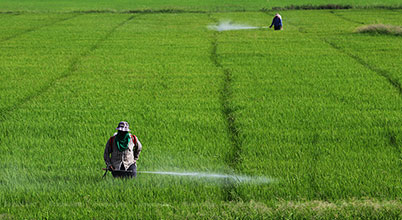 Thailand reversed a planned ban on glyphosate and delayed ban on paraquat and chlorpyrifos
