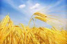 全国农技推广中心:2020年我国农作物重大病虫害发生将重于2019年