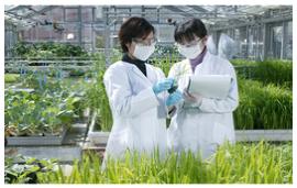 住友化学:SDHI类新型杀菌剂Inpyrfluxam首上市    发力并购强化渠道及终端市场优势