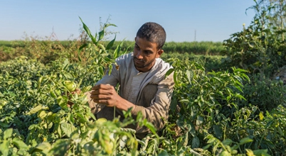 A brief journey of the agricultural sector in Egypt