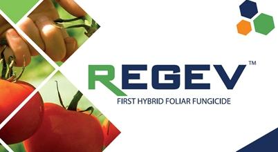 STK REGEV® 'Hybrid' Fungicide Registered in Chile