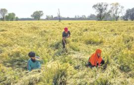 Softer input cost, good start to kharif season boost Dhanuka Agritech prospects