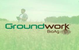 瞄准菌根菌剂新市场下的机遇——专访以色列Groundwork BioAg联合创始人兼销售与市场副总裁