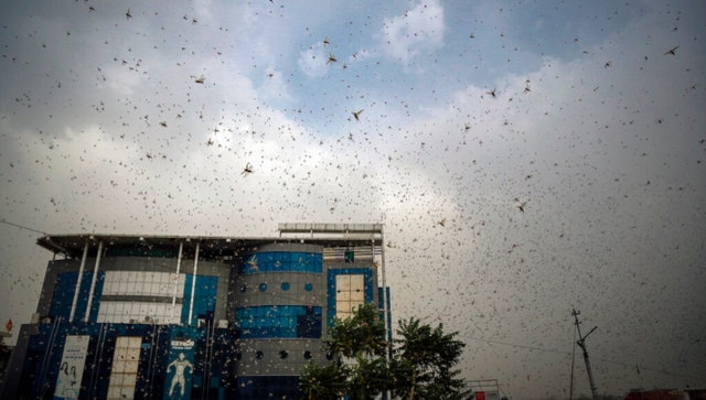 India deploys helicopters, 12 drones to spray insecticides and monitor swarms after nine states report sightings of locusts