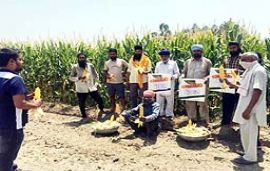 Bayer Crop Science introduces Spring Maize in Jammu region