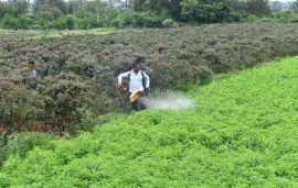 Centre urged Indian Govt to rethink on ban of pesticides