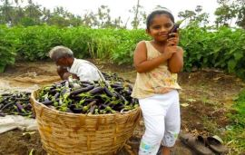 Viewpoint: GMO crops are safe and nutritious. India needs them to feed itself