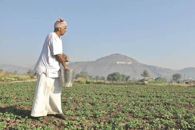 After strong start, monsoon rainfall peters out in August; crop sowing remains robust in India