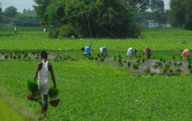Time for Indian farmers to reform digitally