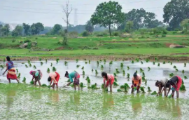 The illusion of a revival in Indian agricultural sector