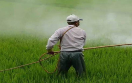 Explained: Why Punjab govt's temporary ban on nine pesticides can't put a stop on their use