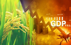 Indian agriculture sector has beaten pandemic, latest GDP figures show