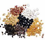 Monsanto setting dual seed price plan for 2010