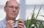 Syngenta Cruiser seed treatment insecticide registered for use on rice