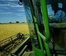 Global crop protection market forecasted 6% decline in 2009