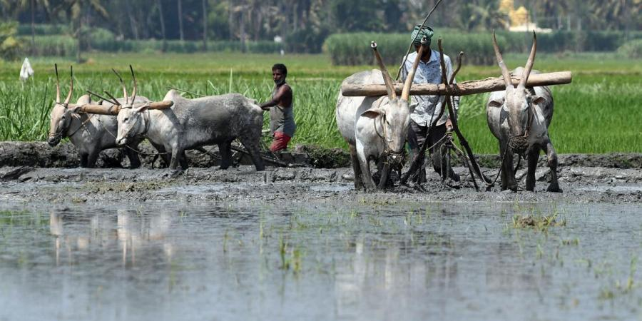 Analysing the centre's reforms in Indian agriculture sector