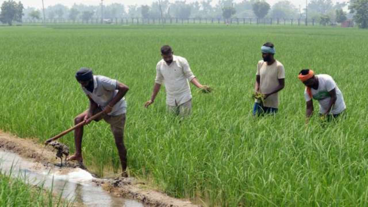 Corporatisation of the Indian agricultural sector