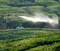 Indian pesticide industry poised to grow 3.2%