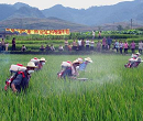 Bio-pesticide shenqinmycin to be launched in China