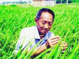 China's agricultural guru devotes to finishing new hybrid rice in 2012